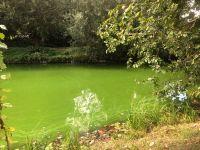 IMG-green2